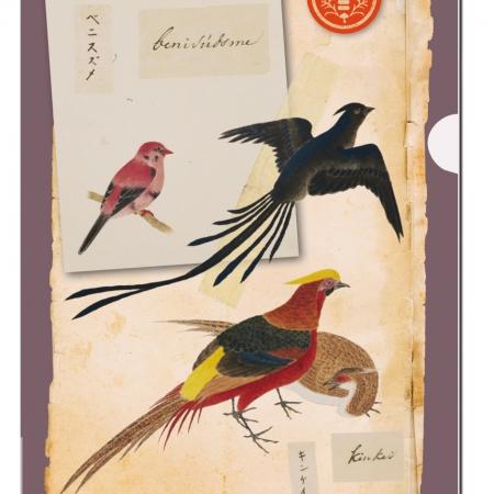 Bayreuth Buchhandlung Bekking Blitz L-Ordner Vögel Philipp Franz von Siebold